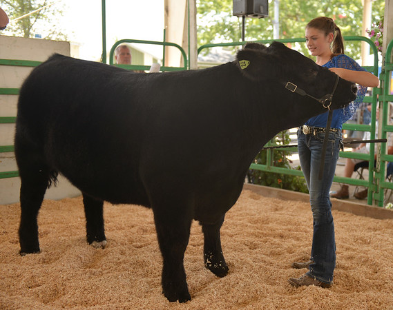 MacKenzie Engel of Burlington Ag shows her Grand Reserve Champion Champion Steer in the 4-H Blue Ribbon sale July 23 at the Kane County Fair in St. Charles.