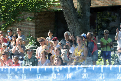 Candace H. Johnson-For Shaw Media A crowd watches the DockDogs Extreme Vertical canine aquatics competition during the Dog Days of Summer on Church Street in Libertyville. (7/6/18)
