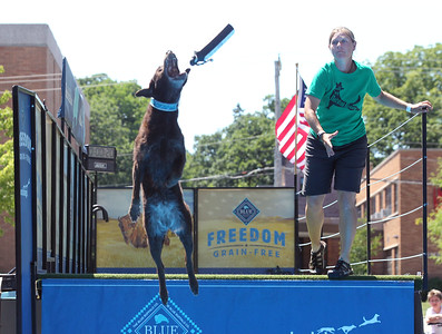 Candace H. Johnson-For Shaw Media Emily Stoddard, of Chicago throws her dog, Keegan, a Belgian Malinois, a toy to catch before she lands in the water during the DockDogs Big Air Wave long jump competition at the Dog Days of Summer on Church Street in Libertyville. (7/6/18)