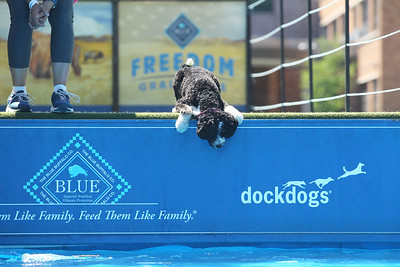 Candace H. Johnson-For Shaw Media Rachel Pomeroy, of Libertyville stands close to her dog, Jett, a seven-month-old Bernedoodle, as he figures out whether he will jump in the water to get a stick in the DockDogs Big Air canine aquatics competition during the Dog Days of Summer on Church Street in Libertyville. (7/6/18)