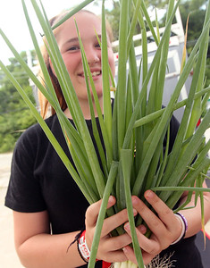 Candace H. Johnson-For Shaw Media Ella Melton, 12, of Grayslake holds up a bunch of green onion she was selling with her mother, Shasta, in their Melton Foods booth at the Fox Lake Farmers Market at the Community Garden Green on 17 E. School Court in Fox Lake. The farmers market runs on Tuesdays from 4-8 pm. (7/10/18)