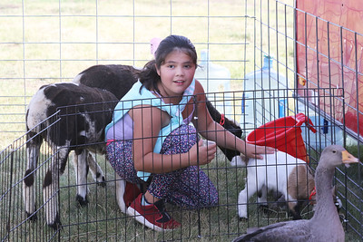 Candace H. Johnson-For Shaw Media Baleria Muniz, 9, of Hainesville pets a goat in the Miller's Petting Zoo during BeachFest at the Cultural & Civic Center in Round Lake Beach. (7/14/18)