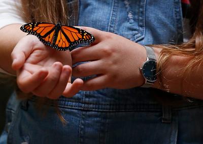 hstyle.072518.raising.monarchs