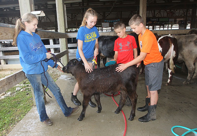 Candace H. Johnson-For Shaw Media Alyssa Riviere-Dembny, 15, of Delavan, Wis., holds on to Thalia, a two-month-old calf, as her siblings Katelyn, 17, Ethan, 11, and Timmy, 14, wash her after just arriving at the Lake County Fair at the Lake County Fairgrounds in Grayslake. (7/24/18)