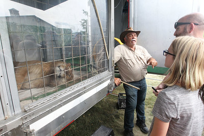 Candace H. Johnson-For Shaw Media Gregg Woody, owner of Woody's Menagerie, talk to visitors about his liger named, Tank, resting in his cage during the 90th Annual Lake County Fair at the Lake County Fairgrounds in Grayslake. The liger's mother is a tiger and the father is a lion.