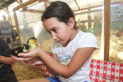 Candace H. Johnson-For Shaw Media Natalie Ortega, 10, of Grayslake holds a one-week-old duckling during the 90th Annual Lake County Fair at the Lake County Fairgrounds in Grayslake.The duckling came from the Beelow farm in Mundelein.