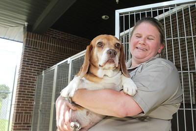 Candace H. Johnson-For Shaw Media Courtney Randle, assistant program coordinator, holds a Beagle named, Daisy, at Lake County Animal Care & Control in Libertyville. Daisy was dropped off because the owner was moving and could not take the dog. (7/9/19)