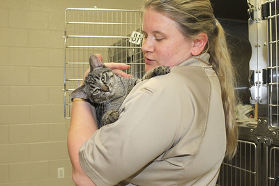 Candace H. Johnson-For Shaw Media Courtney Randle, assistant program coordinator, holds a four-month-old kitten in the General Cat Room   found in the Round Lake area at Lake County Animal Care & Control in Libertyville. The kitten will be going to Orphans of the Storm animal shelter in Deerfield. (7/9/19)