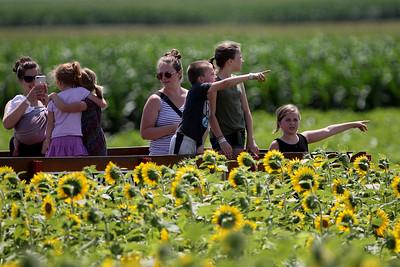 hnews_0720_Sunflower_Maze
