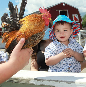 Candace H. Johnson-For Shaw Media Bryce Halabrin, of Lakemoor, 2, looks at a rooster as his mother, Vanessa, holds him in the Farmyard at Lambs Farm in Libertyville. The rooster was held by Katie Donnellan, of Grayslake, lead animal keeper and Farmyard assistant manager. (7/12/20)