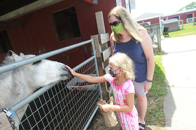 Candace H. Johnson-For Shaw Media Karen McCormick and her daughter, Anna, 6, of Lindenhurst visit with a standard donkey named, Squirt, in the Farmyard at Lambs Farm in Libertyville. (7/12/20)