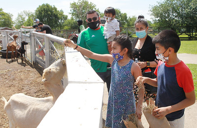 Candace H. Johnson-For Shaw Media Alberto and Naomi Cardena, of Palatine and their children, Matteo, 1, Michelle, 8, and Alberto, Jr., 10, feed the goats in the Farmyard at Lambs Farm in Libertyville. (7/12/20)