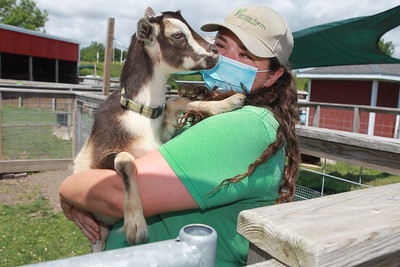 Candace H. Johnson-For Shaw Media Katie Donnellan, of Grayslake, lead animal keeper and Farmyard assistant manager, holds one of her favorite goats at Lambs Farm in Libertyville. (7/12/20)
