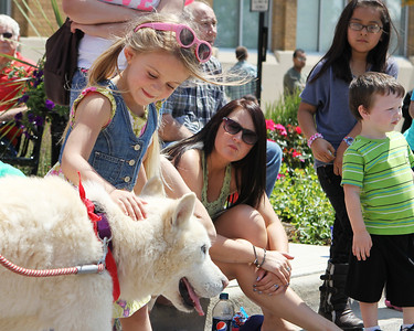 Mike Greene - mgreene@shawmedia.com Raela Greene, 4 of Wonder Lake, pets a husky from Free Spirit Siberian Rescue of Harvard during the 71st Annual Milk Days Parade Saturday, June 2, 2012 in Harvard.