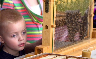 "John Konstantaras/for the Northwest Herald Barrett Buchanan, 3 from McHenry, watches Harvard beekeeper Doug Hawthorne's Italian honey bees at the ""A Day on the Farm"" program at the Colonel Palmer House. The event was sponsored by theCrystal Lake Park District and the Crystal Lake Historical Society."