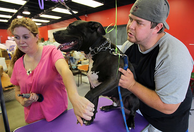 Sarah Nader - snader@shawmedia.com Josh Wilson (right) of Cary holds down his dog, Keno. while Erin Hogue, owner of Erin's Mobil Pet Grooming trims the dogs nails during the All About Dogs Luau and Pet Adoption hosted by On Angels' Wings in Crystal Lake on Saturday, June 16, 2012.
