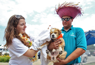 Sarah Nader - snader@shawmedia.com Ron Beres (right) holds his foster dog, Roger, whole volunteer Anna Fredrick, 17, of Fox River Grove dries him off after a bath during the All About Dogs Luau and Pet Adoption hosted by On Angels' Wings in Crystal Lake on Saturday, June 16, 2012. Roger is a six years old, mixed unknown breed and is available for adoption.