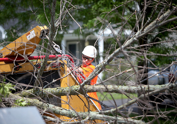Geneva Public Works employee Eric Moutray guides an ash tree into a chipping machine as it is removed from Green Meadow Lane in Geneva Thursday.
