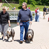 Michelle Molloy and Steve Finney of Orland Park, IL enjoy the weather at The St. Charles River Fest while walking their Bearded Collies Chanel 3, and Chauncey 16 months,<br /> at Pottawatomie Park in St.Charles, IL on Sunday, June 08, 2014 (Sean King for Shaw Media)