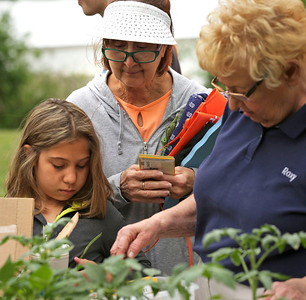 John Konstantaras - For Shaw Media Master Gardener Roxy Banet, right, from Crystal Lake, helps Donna Volpi and her grand daughter Mercades Goslawski, 10, both from Crystal Lake, pick plants for their garden at the Nunda Township Garden plots on Saturday, June 4, 2016 in Crystal Lake. Residents learn to grow their own vegetables through Garden Connect, a pilot program launched by the Northern Illinois Food Bank, The U of I Extension and community partners, including the McHenry County Department of Health.   The program connects Crystal Lake Food Pantry patrons with volunteer gardening experts to show them how to grow their own food on land donated by Nunda Township in its township garden plot.