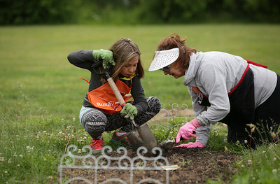 John Konstantaras - For Shaw Media Mercades Goslawski, 10, helps her grandmother Donna Volpi, both from Crystal Lake, with their garden at the Nunda Township Garden plots on Saturday, June 4, 2016 in Crystal Lake. Residents learn to grow their own vegetables through Garden Connect, a pilot program launched by the Northern Illinois Food Bank, The U of I Extension and community partners, including the McHenry County Department of Health.   The program connects Crystal Lake Food Pantry patrons with volunteer gardening experts to show them how to grow their own food on land donated by Nunda Township in its township garden plot.