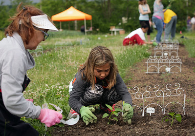 John Konstantaras - For Shaw Media Donna Volpi, from Crystal Lake, gets some help from her grand daughter Mercedes Goslawski, 10, as they work in their garden at the Nunda Township Garden plots on Saturday, June 4, 2016 in Crystal Lake. Residents learn to grow their own vegetables through Garden Connect, a pilot program launched by the Northern Illinois Food Bank, The U of I Extension and community partners, including the McHenry County Department of Health.   The program connects Crystal Lake Food Pantry patrons with volunteer gardening experts to show them how to grow their own food on land donated by Nunda Township in its township garden plot.