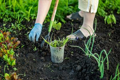 hnews_thur0616_Community_Garden2.jpg