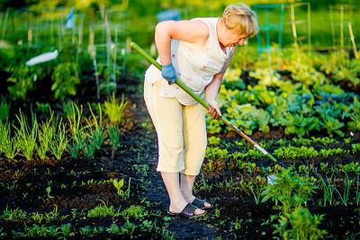 hnews_thur0616_Community_Garden1.jpg