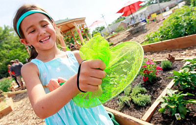 Candace H. Johnson Carolena Moore, 6, of Fox Lake catches a cabbage butterfly at the Community Garden of Fox Lake on Forest Avenue.