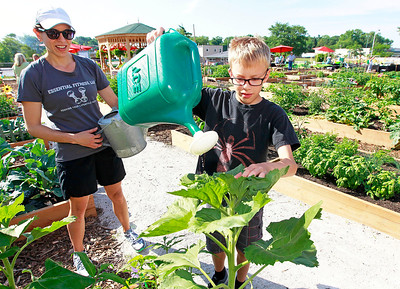 Candace H. Johnson Jobi Ledger, of Ingleside watches her son, James, 9, water their organic vegetable plants at the Community Garden of Fox Lake on Forest Avenue.