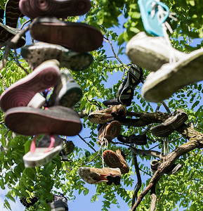 hnews_adv_Shoe_Tree_02.jpg