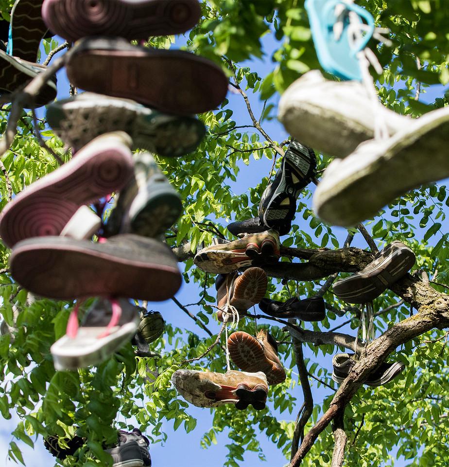 hnews_adv_Shoe_Tree_02.jpg