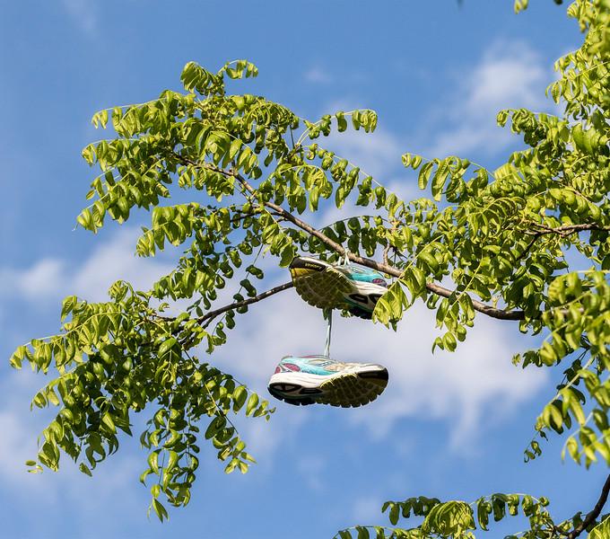 hnews_adv_Shoe_Tree_Cover.jpg