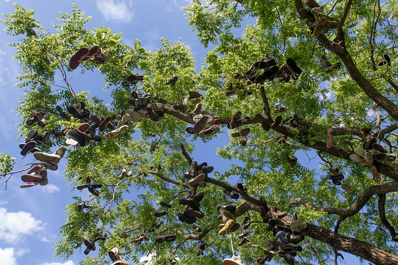 hnews_adv_Shoe_Tree_01.jpg