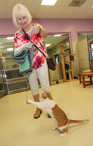 Candace H. Johnson-For Shaw Media Susan Noon, of Lindenhurst plays with Nimbo Stratus, a one-year-old female cat, with a ball of yarn in the main cat room as she holds some of the crocheted blankets she is donating at Save-A-Pet in Grayslake. June is Adopt-A-Shelter Cat Month. (6/14/18)