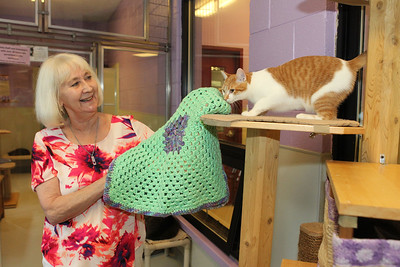 Candace H. Johnson-For Shaw Media Susan Noon, of Lindenhurst shows Nimbo Stratus, a one-year-old, short-haired orange tabby up for adoption a crocheted blanket she was donating to Save-A-Pet in Grayslake. June is Adopt-A-Shelter Cat Month. (6/14/18)