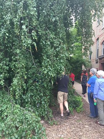 Elmhurst Arboretum Tour