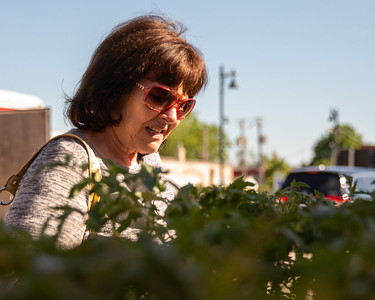 Linda Blalaric shops tomato plants at the Downtown Crystal Lake Farmers Market Saturday, June 8, 2019 in Crystal Lake.  KKoontz – For Shaw Media