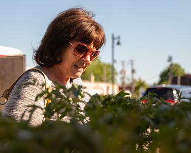 Linda Blalaric shops tomato plants at the Downtown Crystal Lake Farmers Market Saturday, June 8, 2019 in Crystal Lake.  KKoontz – For Shaw Media
