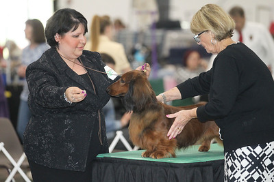Candace H. Johnson-For Shaw Media Judge Betty-Anne Stenmark (on right)  looks over a longhaired dachshund with handler, Tatyana Godin, of Ontario, Canada in the Best of Breed Longhaired Dachshund category during the Grayslake Summer Dog Show Cluster at the Lake County Fairgrounds in Grayslake. Stenmark was the Best of Show judge at the Westminster Kennel Club Dog Show at Madison Square Garden in New York. (6/16/19)