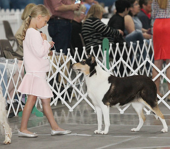 Candace H. Johnson-For Shaw Media Braelynn Gossage, 9, of Fairbury, waits to shows her smooth Collie named, Delta, to a judge during the Grayslake Summer Dog Show Cluster at the Lake County Fairgrounds in Grayslake.  Dogs from all over the world came to the dog show. (6/16/19)