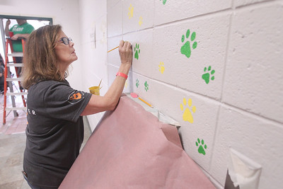 Candace H. Johnson-For Shaw Media Volunteer Denise Bernat, of Wauconda paints paw prints outside of the gym during the Discover Business Technology and Volunteer Day at Gavin South Middle School in Ingleside. Over 500 volunteers from Discover Financial Services came to Gavin South to help at the event. (6/20/19)