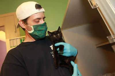 Candace H. Johnson-For Shaw Media Tim Medeiros, of Spring Grove, feline lead, holds a kitten, already adopted, in the Kitten Room at the Save-A-Pet adoption center in Grayslake. Save-A-Pet, a non-profit organization, is the largest no-kill cat and dog rescue in Lake County.  (6/1/20)