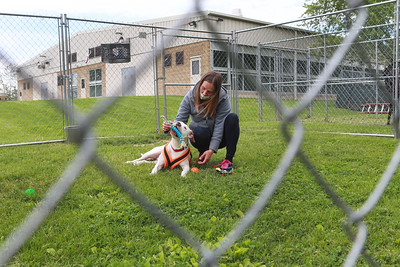 Candace H. Johnson-For Shaw Media Sheila Schuld, of Island Lake, kennel staff, plays with Vinny, 8, an American Staffordshire Terrier, in an outdoor enclosure at the Save-A-Pet adoption center in Grayslake. Save-A-Pet, a non-profit organization, is the largest no-kill cat and dog rescue in Lake County.  (6/1/20)