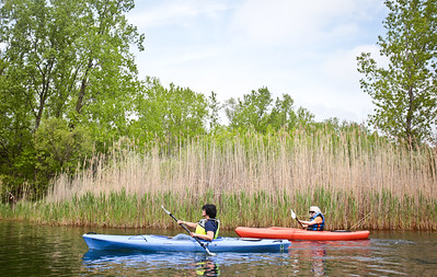 Michelle LaVigne/ For Shaw Media Maria Athas of Cary (left,) and her friend and neighbor JoAnne Knaack paddle their way to shore during the Paddle in the Park event in the Hollows Conversation Area in Cary on Saturday, May 16, 2015.
