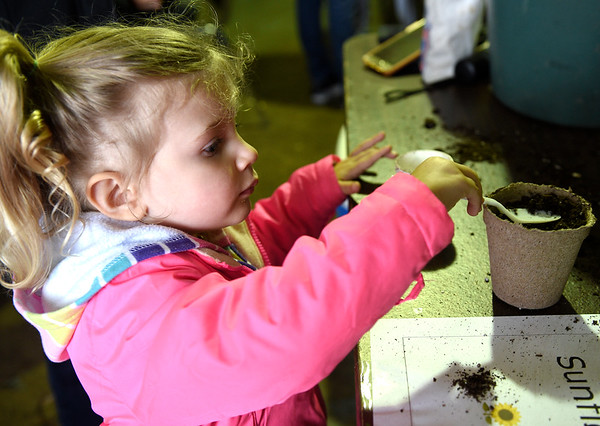 Caitlynn Koffenberger plants a red sunflower at the Fox Valley Wildlife Center's annual Wild Baby Shower April 30. There were many games, crafts and education ambassadors to talk to during the event.