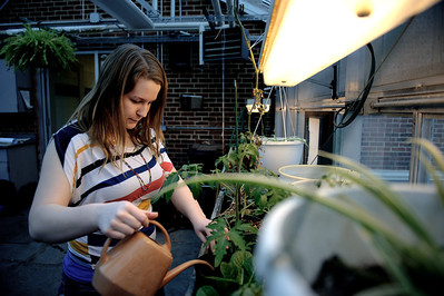 Daniel J. Murphy - dmurphy@shawmedia.com  Becca Nattress, 17, of Woodstock waters plants in the green house at Woodstock High School Wednesday February 29, 2012 in Woodstock.