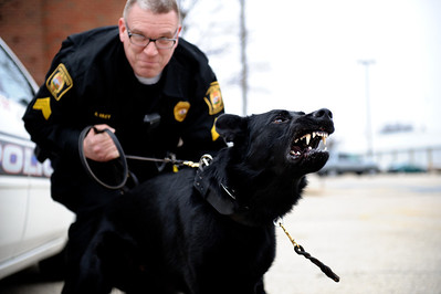 Daniel J. Murphy - dmurphy@shawmedia.com  Sgt. Riley displays Shadow's attack posture Thursday March 1, 2012 in Marengo. Shadow is a three year-old german Shepard that trained in handler protection, tracking, and article search.