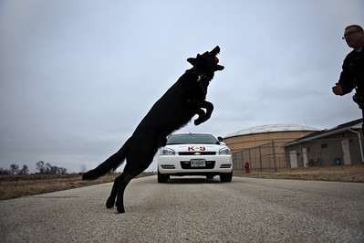 Daniel J. Murphy - dmurphy@shawmedia.com  Sgt. Riley plays catch with Shadow the Marengo police dog Thursday March 1, 2012 in Marengo.