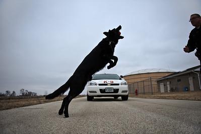 Daniel J. Murphy - dmurphy@shawmedia.com  Sgt. Riley plays catch with Shadow the Marengo police dog Thursday March 1, 2012 in Marengo.
